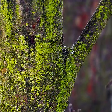 Moss on a tree by boogeyman