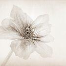 Vellum by John Edwards