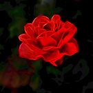 Red rose by Patriciakb