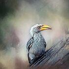 Southern yellow-billed Hornbill. by Lyn Darlington