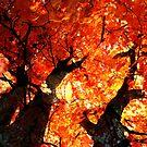 Autumn Collage by aquarius84