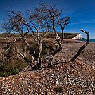 Tree Framed Cliffs by Dave Godden
