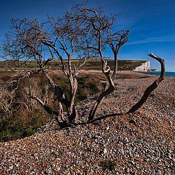 Tree Framed Cliffs by RWTA