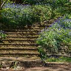 Follow the bluebell path by Sue Purveur