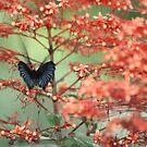 Butterfly Haze by Pinkanna1980