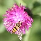 Hoverfly Picnic by Pinkanna1980