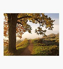 My path Photographic Print