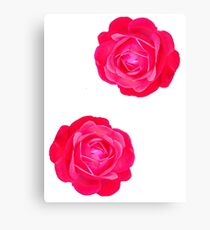 Two pink roses Canvas Print