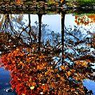 In Reflection by LudaNayvelt