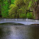 Walking Bridge at Magnolia Plantation by TJ Baccari Photography
