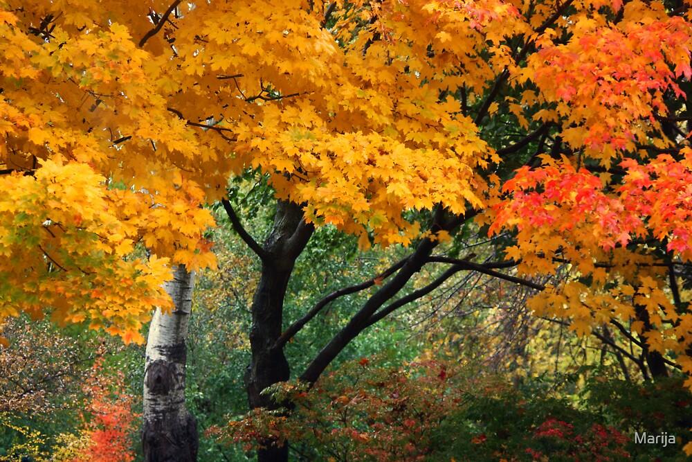 Autumn Serenade by Marija