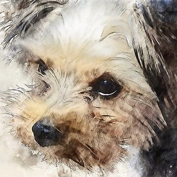 Yorkshire Terrier Sketch by markcsalmon