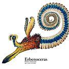 Erbenoceras Plate by Liam Elward