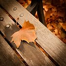 Leaf on Bench by Carlos Restrepo