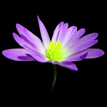 magical, violet flower, flower, summer, nature by rhnaturestyles