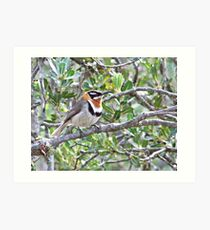 Spinebill of Foxes Lair Art Print