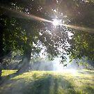 Smoky Tree Sun Rays - Portrait Shot by Naean Howlett-Foster