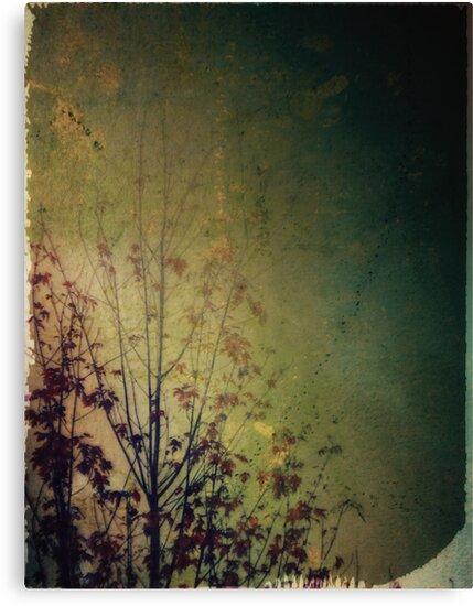 Lingering reverie by Nikki Smith