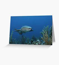 Reef Cruiser Greeting Card