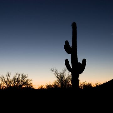 arizona desert at dawn by ryfoto