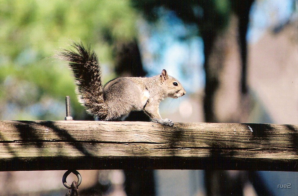 Mr. squirell by rue2