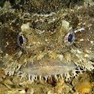 Frogfish by Andrew Trevor-Jones