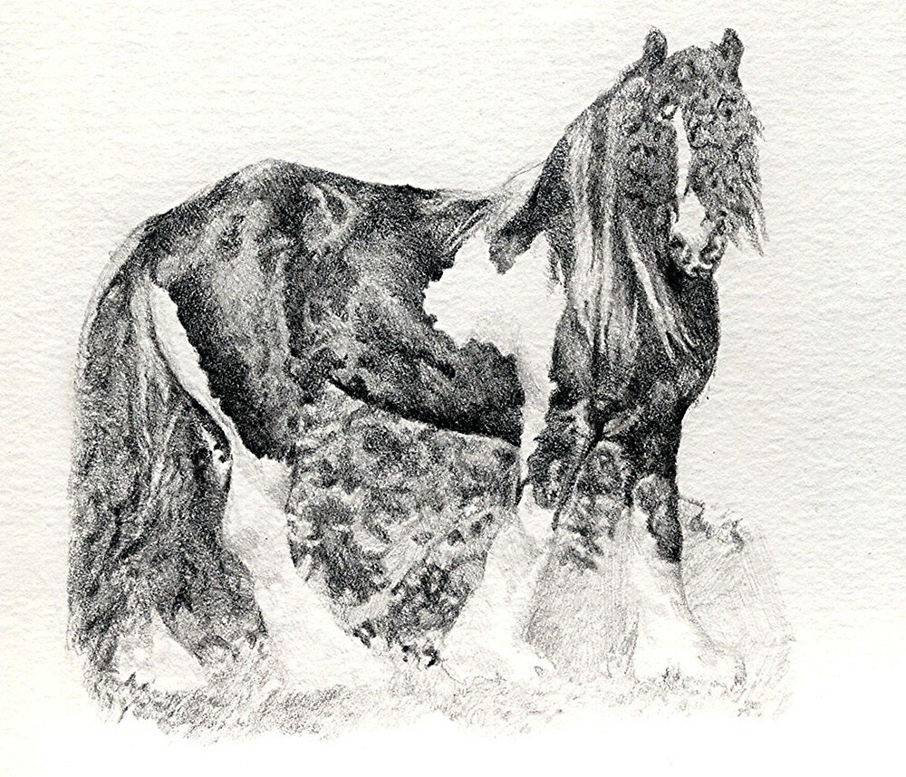 Gypsy Cob Horse Portrait by Oldetimemercan