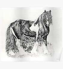 Gypsy Cob Horse Portrait Poster