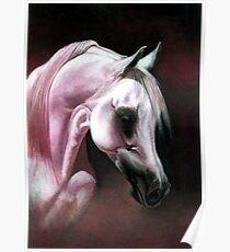 Arabian Horse Portrait Poster