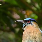 Blue-crowned Motmot by Carole-Anne
