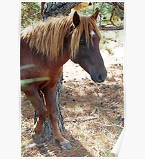 Wild Feral Horse Poster