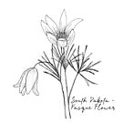 Pasque Flower State Flower of South Dakota by JourneyHomeMade