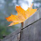 Maple Fence by ReveLinWonder