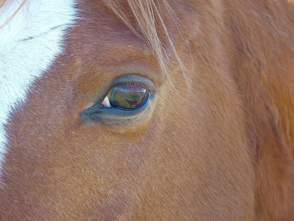 Horse Eye by Sharon Brown