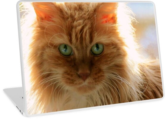 Ginger Cat by Jean Gregory  Evans