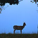Fallow Deer #1 by Trevor Kersley