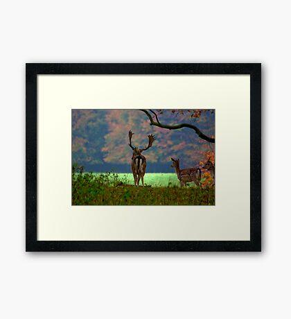 Fallow Deer on Watch Framed Print