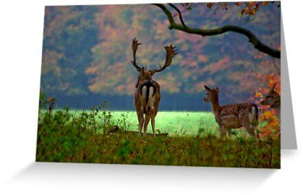 Fallow Deer on Watch by Trevor Kersley