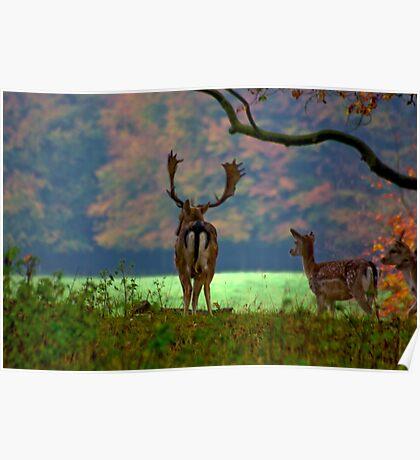 Fallow Deer on Watch Poster