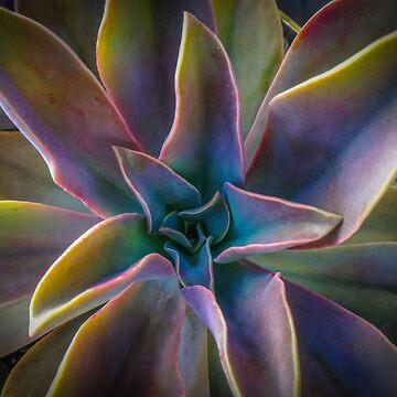 Succulent Rainbow by Clintpix
