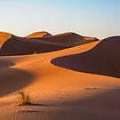 Sahara Sands by Paul Weston