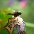 Face Of A Flying Insect by Vanessa Barklay