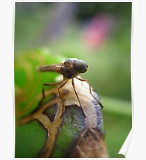 Face Of A Flying Insect Poster