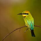 Rainbow Bee Eater, Northern Territory by Andrew Goodall