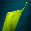 Gecko peeking by Yves Rubin