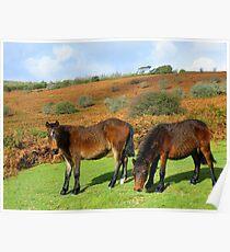 Dartmoor: Double Trouble  Poster