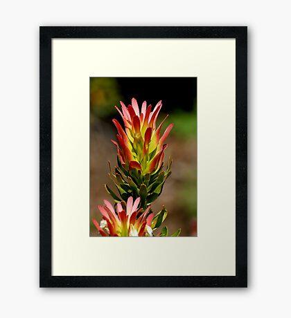 Tree Pagoda Framed Print