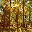 Frühe Herbstlicht von brimel55