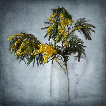 Mimosa by BarbaraCorvino