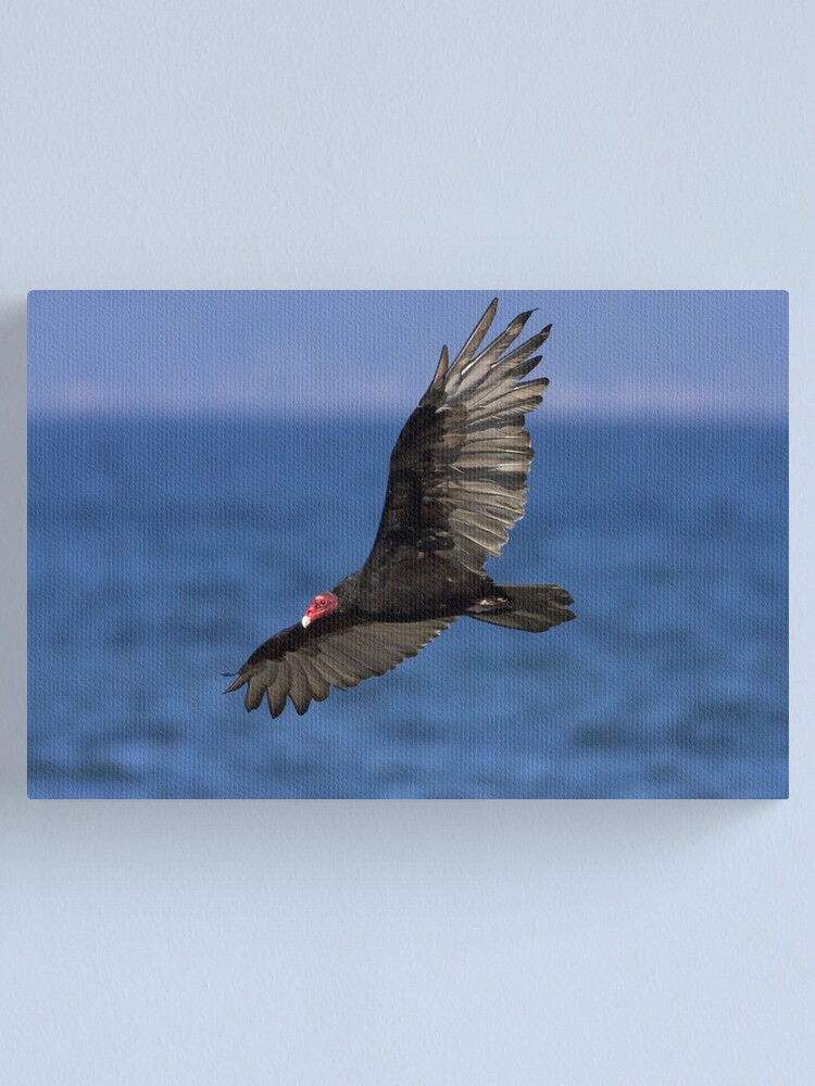 Alternate view of Turkey Vulture Canvas Print